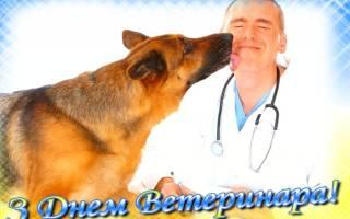 Поздравление с Днем ветеринарии