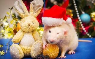 Новогодние поздравления с годом Крысы 2020