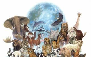 Поздравления на День животных 2020 в прозе