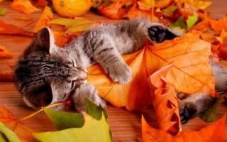 Стихи с днем рождения женщине родившейся Осенью